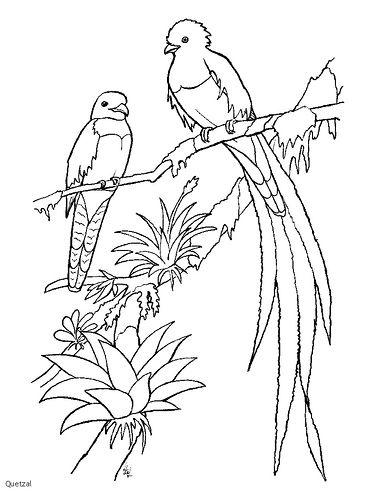 Https Flic Kr P 5h7y5d Quetzal 2 Bird Coloring Pages Coloring Pages Animal Coloring Pages