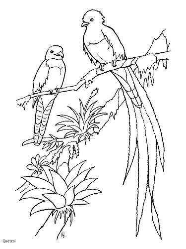 Quetzal 2 Bird Coloring Pages Coloring Pages Animal Coloring Pages