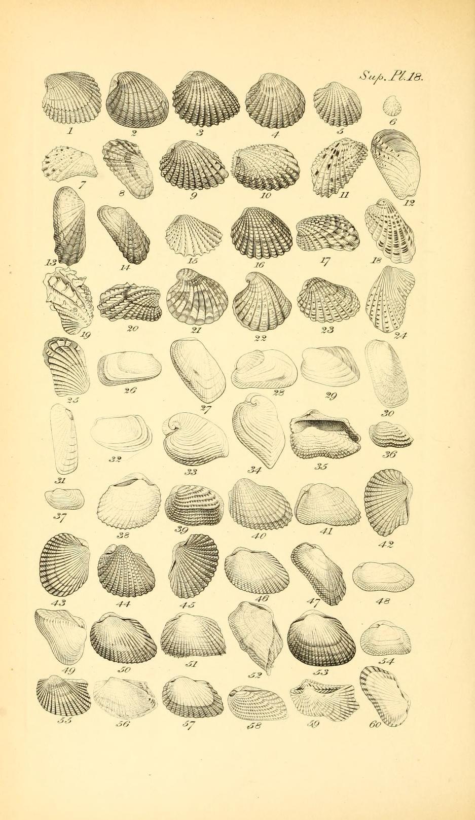 An illustrated and descriptive catalogue of rec...   Nature prints ...