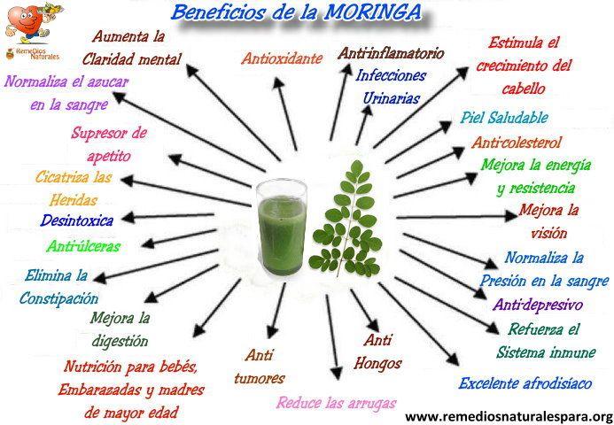 Beneficios De La Moringa 03 Salud Moringa Oleifera