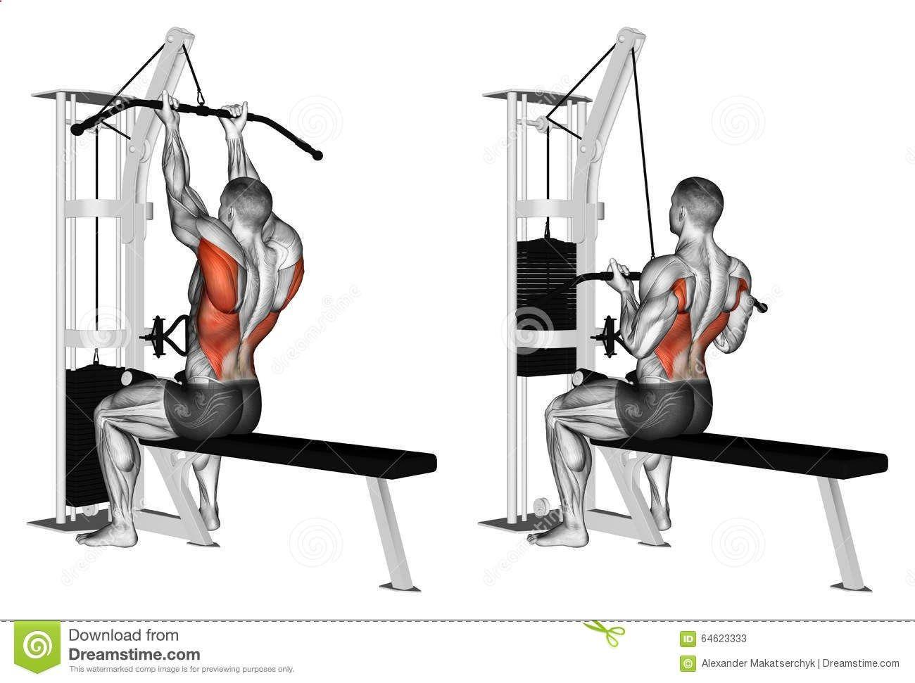 Exercising Thrust Block On Top Of The Simulator Reverse Grip Stock Illustration Image 64623 Ejercicios Musculares Bicicleta Ejercicio Entrenamiento Espalda