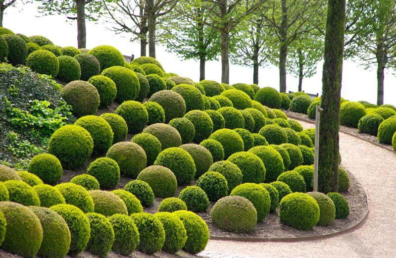 16 Marvellous Topiary Ideas Backyard Landscaping Designs Urban