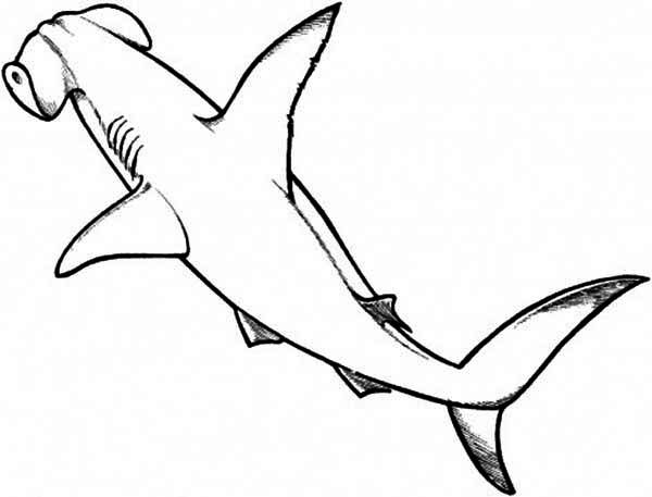 A Drawing Of Hammerhead Shark From The Top Coloring Page Kids Shark Drawing Hammerhead Shark Shark Coloring Pages