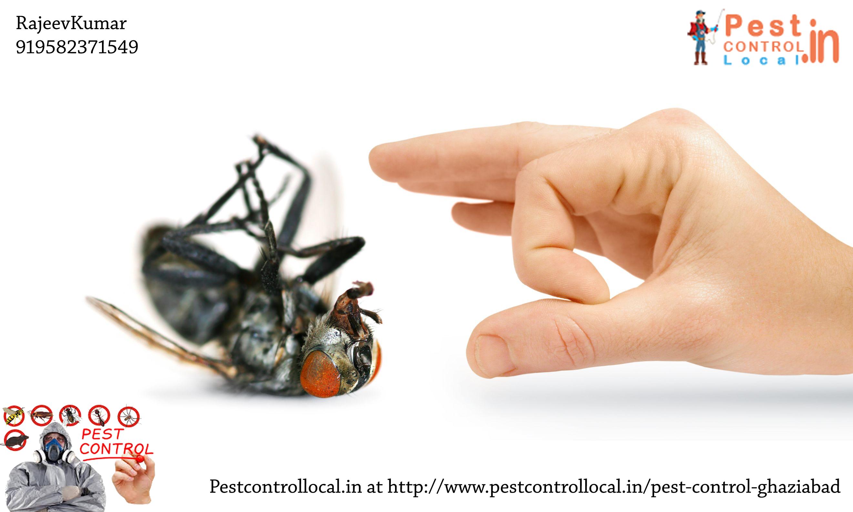 Pestcontrollocal.in Book Pest Control Services in