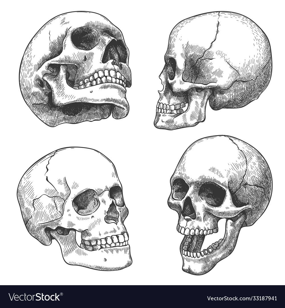 Pin By Shonlindauer On Skulls In 2020 Skull Sketch Skull Art Drawing How To Draw Hands