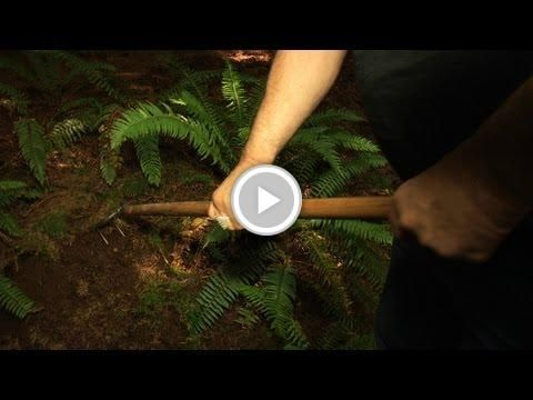 Oregon #White_Truffle_Hunting With Jack Czarnecki #Making_Truffle_Oil