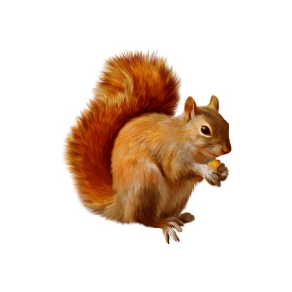 Martad Autumnparty El 28 Png Found On Polyvore Squirrel Clipart Animals Squirrel