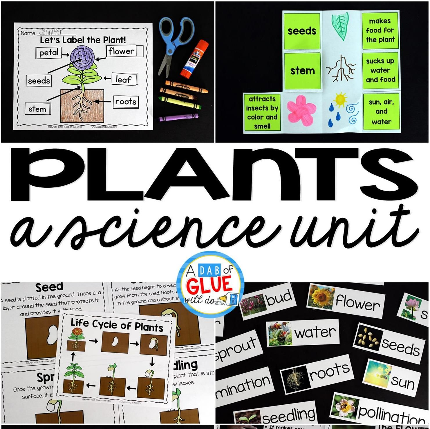 Plants Unit Powerpoint Lessons Printables With Images