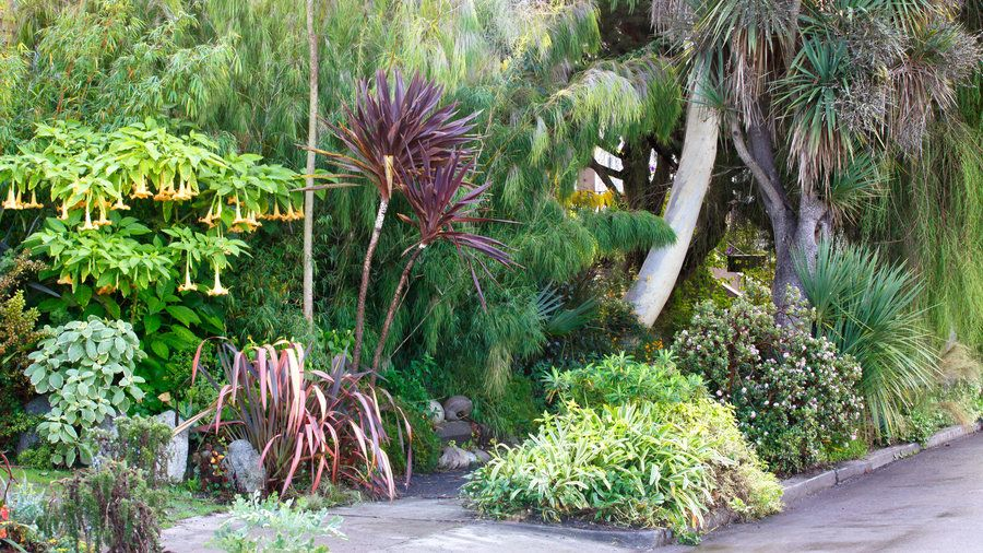 Sidewalk tropics   That narrow strip of land between the sidewalk and street—you know, the spot that the sprinklers don't quite reach—has a big impact on your home's curb appeal. Here are our favorite ideas to transform your hellstrip into a little patch of heaven