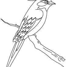 Bird to color online - Coloring page - ANIMAL coloring pages - BIRD coloring pages - BIRDS coloring pages