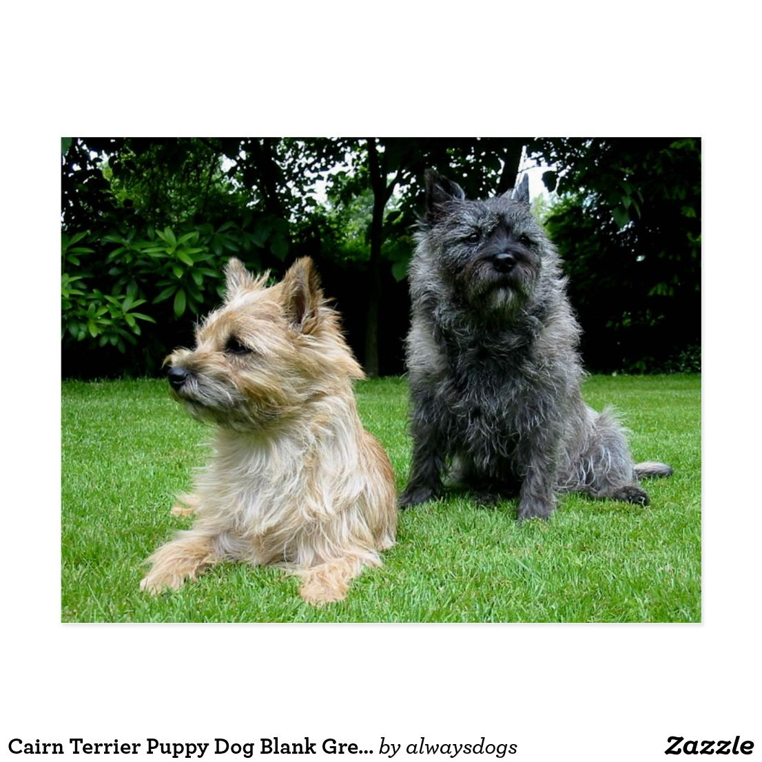 Cairn Terrier Puppy Dog Blank Greeting Post Card Zazzle Com