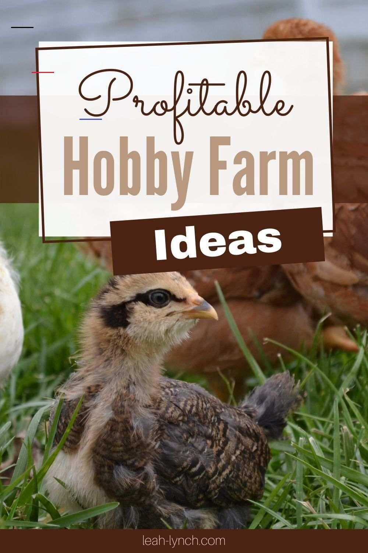 Profitable Hobby Farm Ideas hobbys in 2020 Hobby