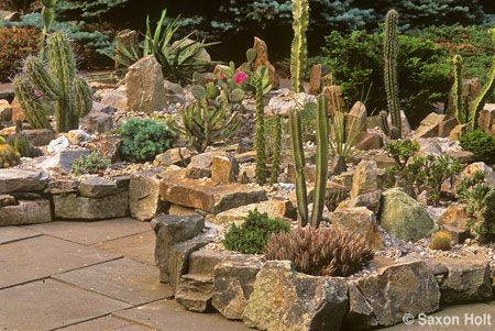 17 Best 1000 images about Desert Landscaping on Pinterest Gardens