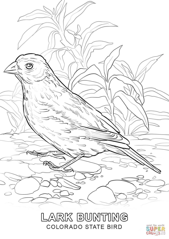 Colorado State Bird Coloring Page Jpg 1020 1440 Bird Coloring