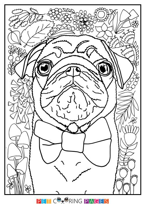 free pug coloring pages - photo#28
