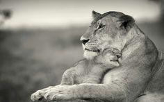 Hembra con su cachorro de leon