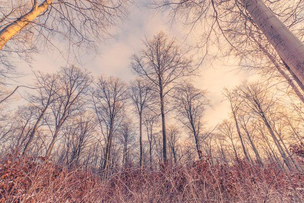 "Kasper Nymann on Twitter: ""Frosty morning in the forest. https://t.co/0PVzfLr7Cr #forest #naturephotography #wintertime #trees #sunrise #nature https://t.co/5iOWbIRVox"""