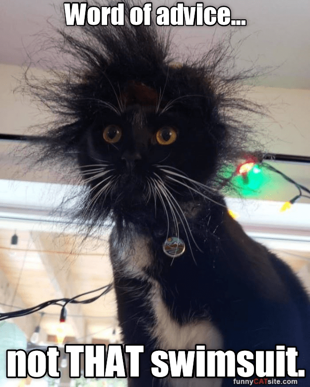 Listen To Frazzled Cat Funny Cat Pictures Funny Animals Funny Cats
