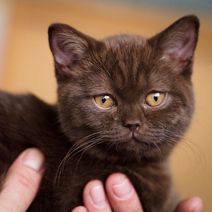 Pretty brown cat http://www.kittyinny.com/ | Cats! | Pinterest ...