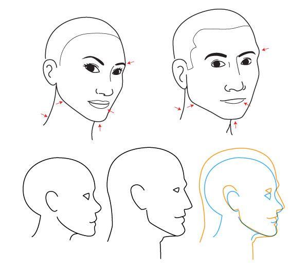 Human Anatomy Fundamentals Advanced Facial Features Envato Tuts