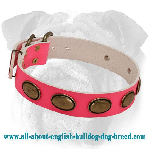 Plated Pink #Leather #Dog #Collar for #English #Bulldog $59.00   www.all-about-english-bulldog-dog-breed.com