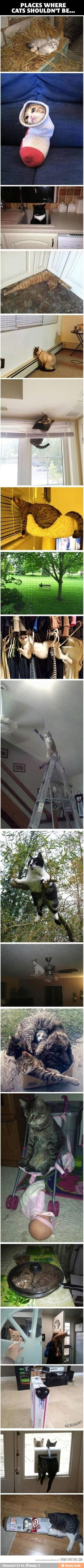Places where cats shouldn't be.. / iFunny :)