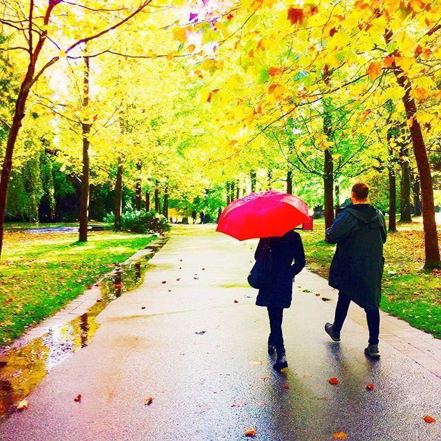 「雨上がり 傘 自然」の画像検索結果