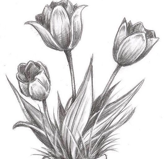 Amazing Pencil Drawings Of Flowers Beautiful Flower Drawings Flower Drawing