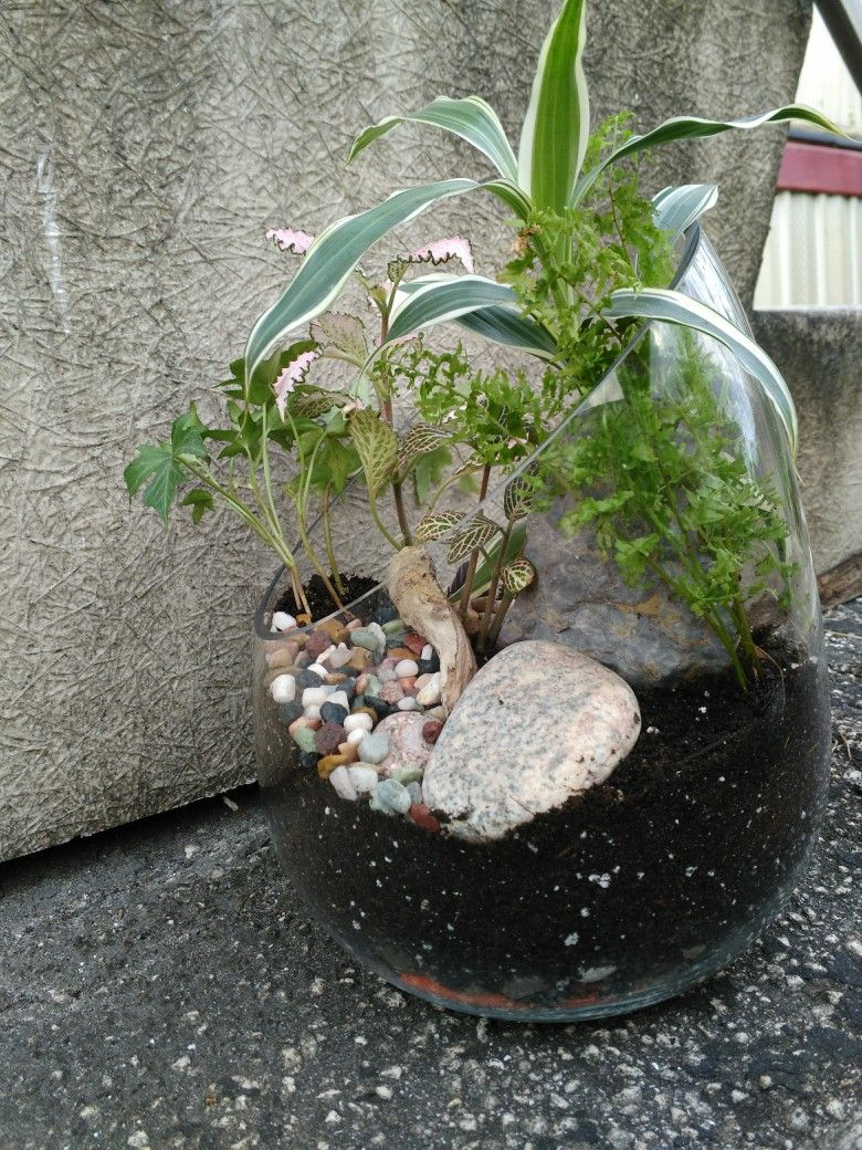 Open Terrarium With Rock Stones Driftwood And Low Light Plants