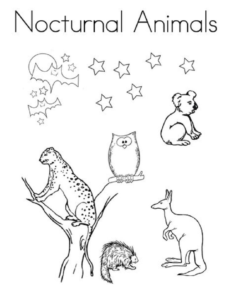 nocturnal animal coloring pages | Coloring Pages For Kids | Pinterest