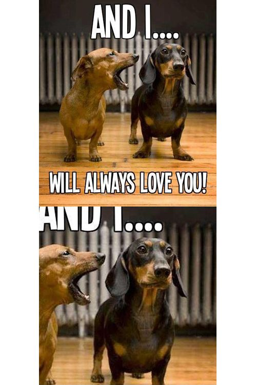 I Will Always Love You Funny Dog Faces Memes Funny Faces Funny Dogs