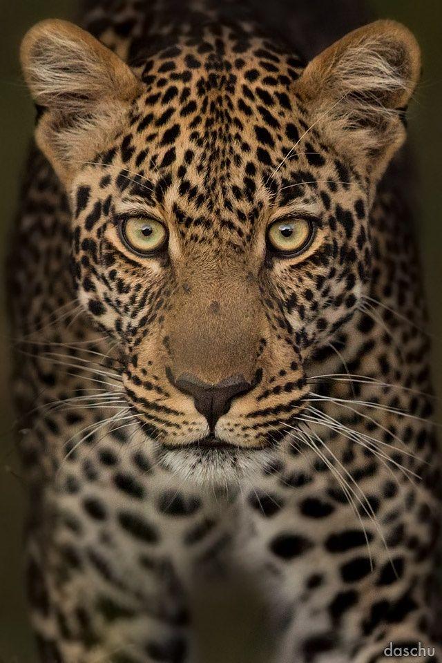 »eyes« by Daniel Schuhmacher on 500px