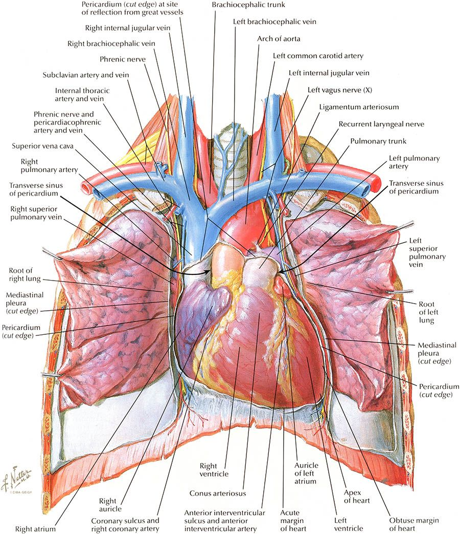 Netters Anatomy Is Seriously Beautiful You Dont Have To Be A