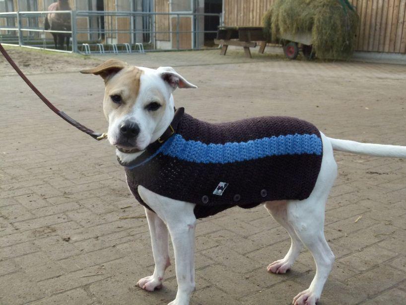 Hund hat Mantel – endlich! | Miriam | Pinterest | Häkeln, Häkeln ...