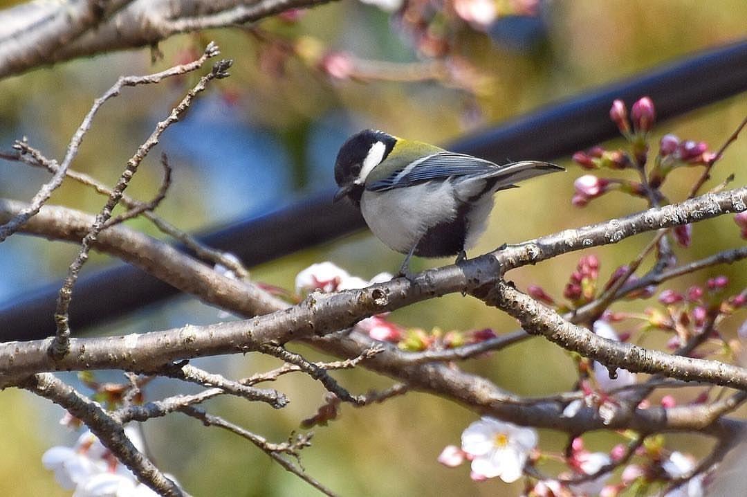 Madarak ( Birds) image by o Madarak