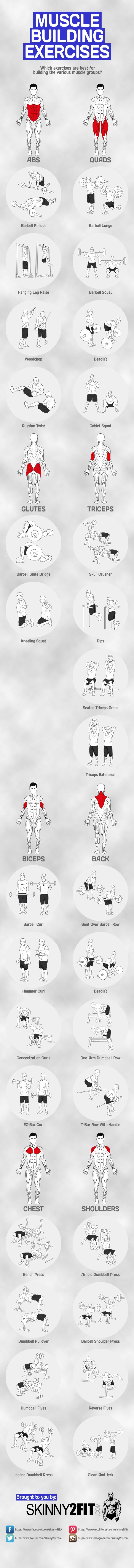 What are the top muscle building exercises for each muscle group? This graphic…