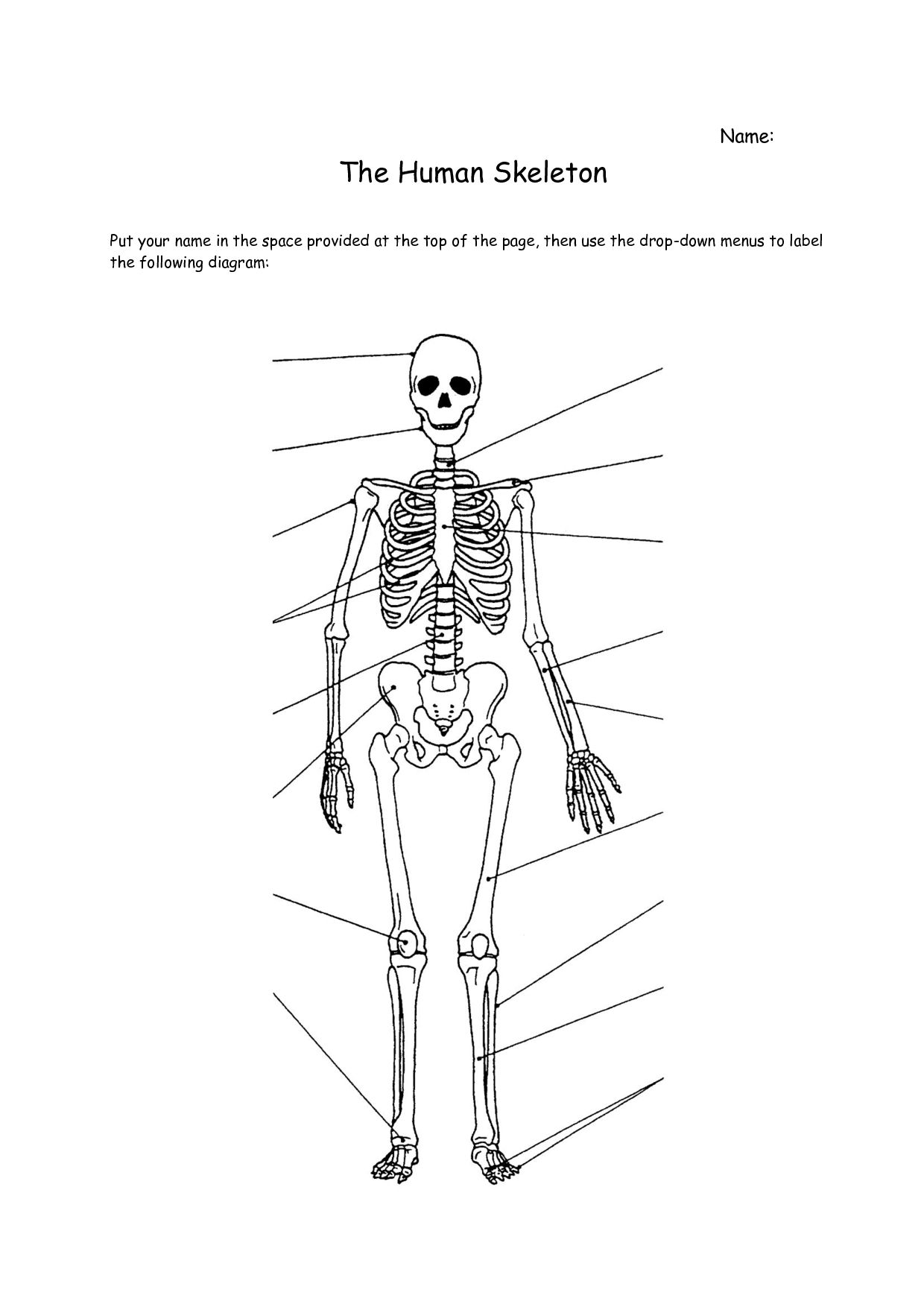 unlabeled diagram of the human skeleton unlabeled diagram of the long bone diagram unlabled [ 1240 x 1754 Pixel ]