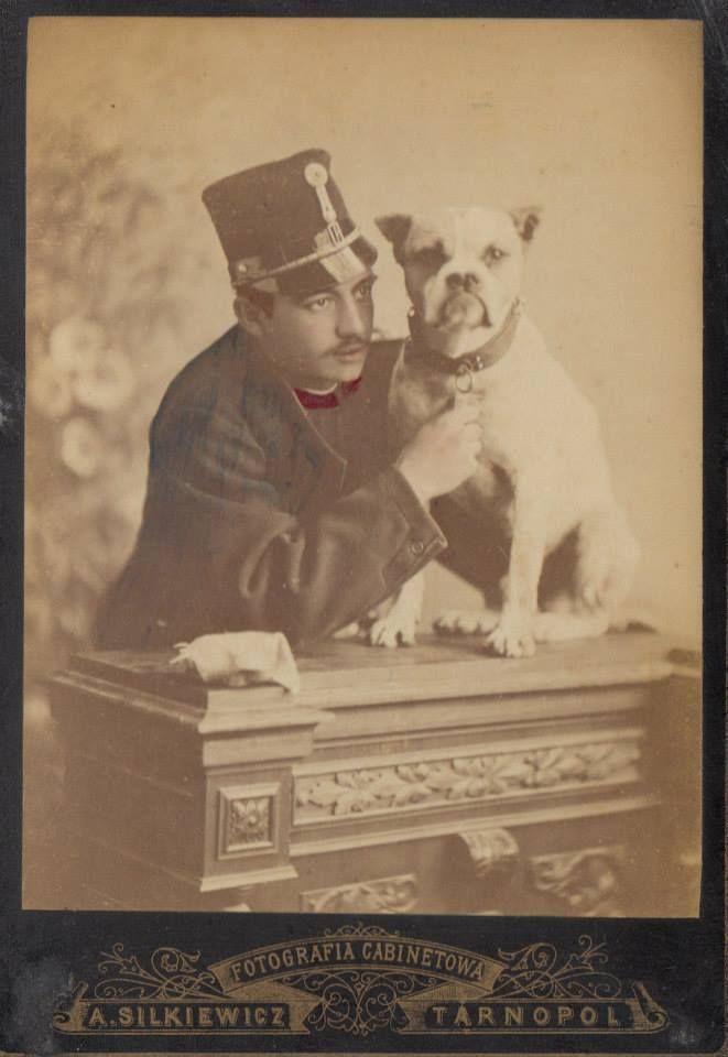 Buldog Tarnopol Ukraine 1882 American Bulldog Bulldog Bulldog Dog