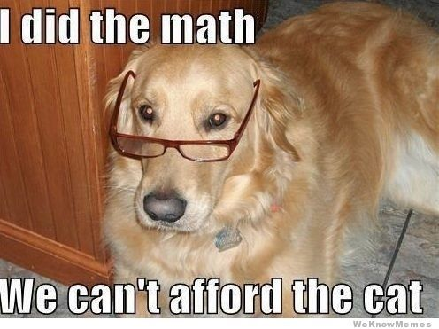 Oh Muffin We Would Never Replace You Funny Dog Memes Funny Dog Pictures Dog Memes