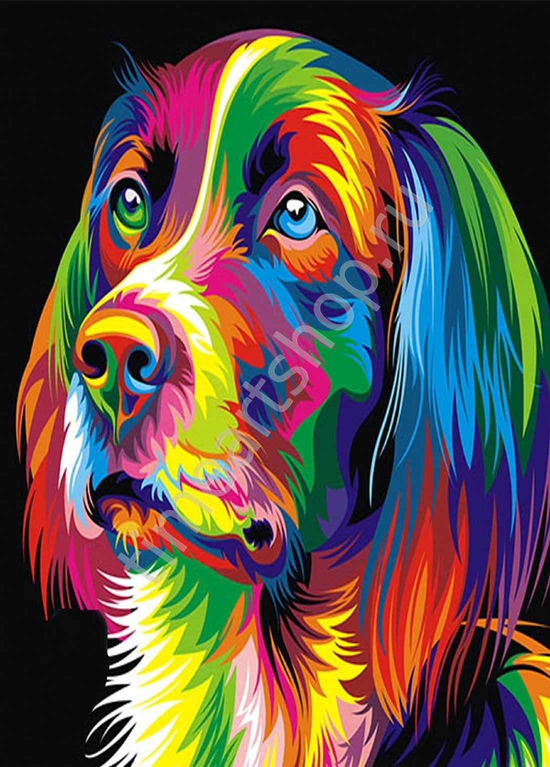 Пёс радужный, картины раскраски по номерам, размер 40*50см ...