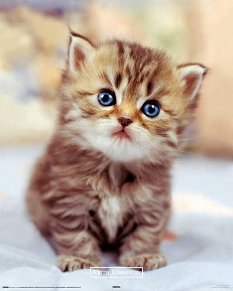 Susse Katzen Google Suche Meo