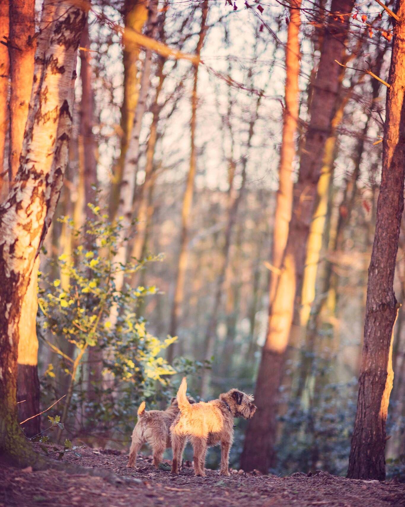 Dynamic Doggy Duo Www Eyesomephotography Com Petphotos Animal Photo Animals Doggy