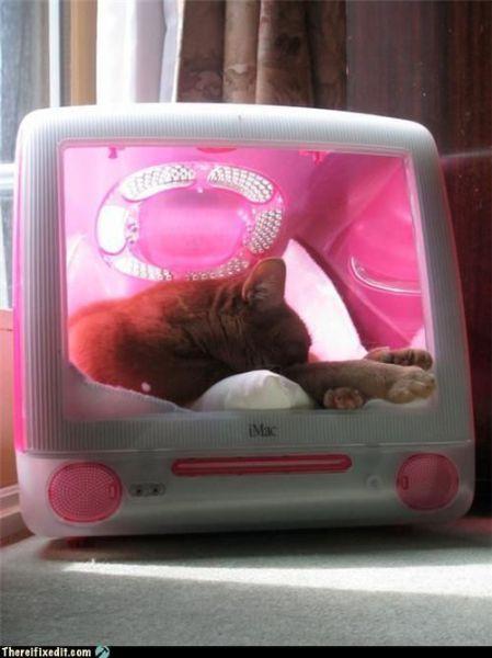 ¿Dónde duerme el gato? Pues dentro de un imac