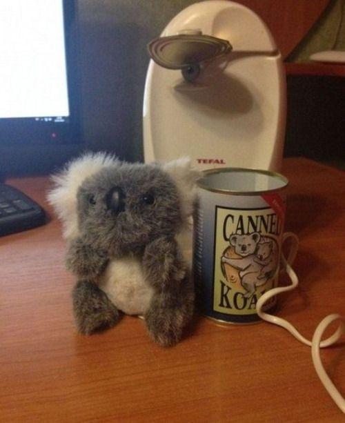 we don't really eat Koala's  :)