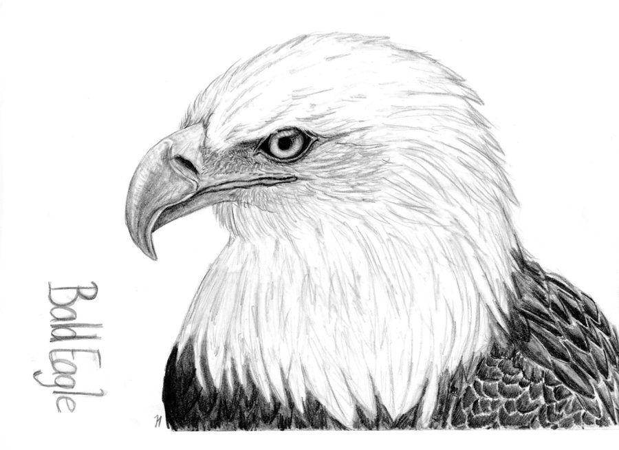 Bald Eagle drawing by ~Montieze on deviantART | Festival ...