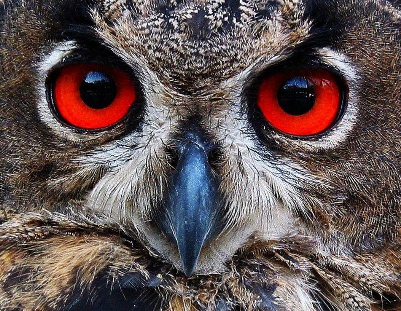 Animals Pixdaus Ojos Rojos Cosas De Color Rojo Animales
