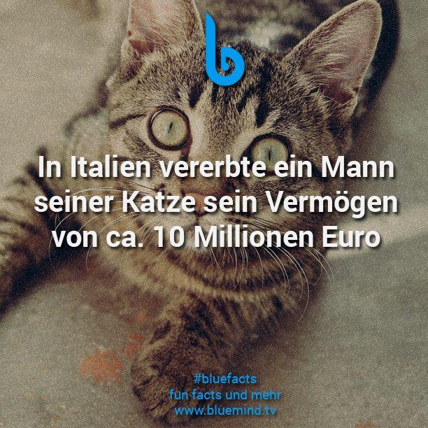 Katzen Fakten