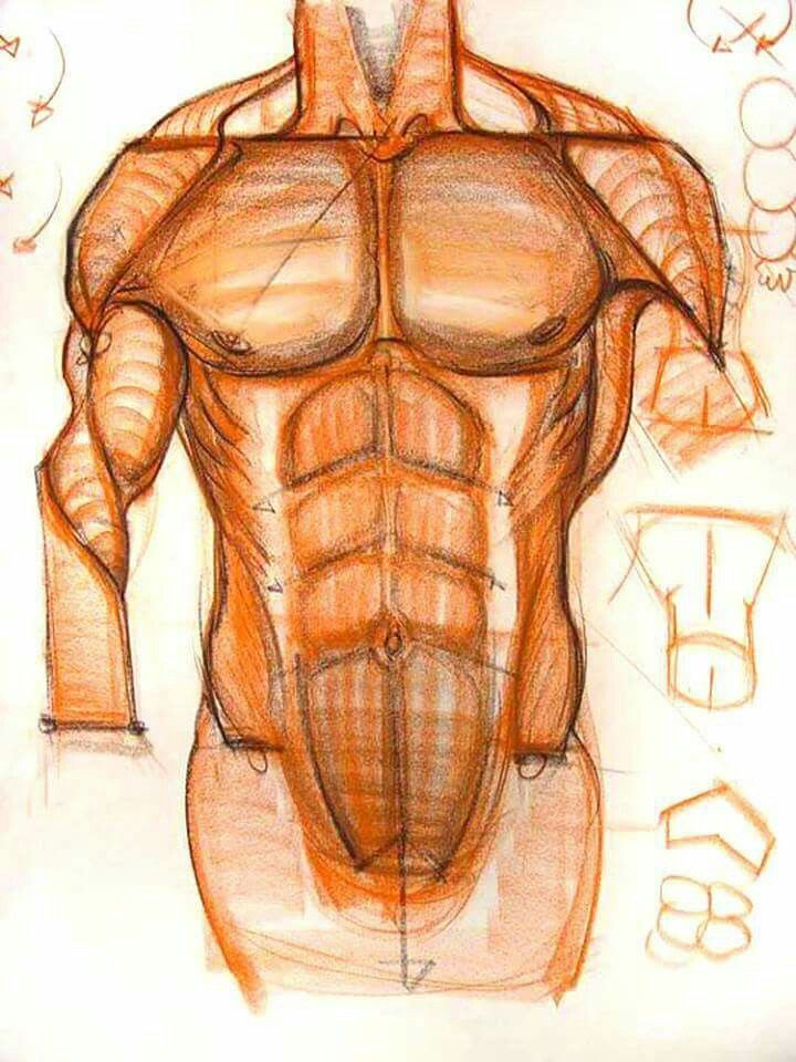 Pin by Hicran Engin on sanatsal anatomi anatomical drawings ...