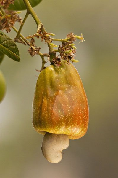 Frutta secca fa dimagrire e allunga la vita food - Frutta che fa andare in bagno ...