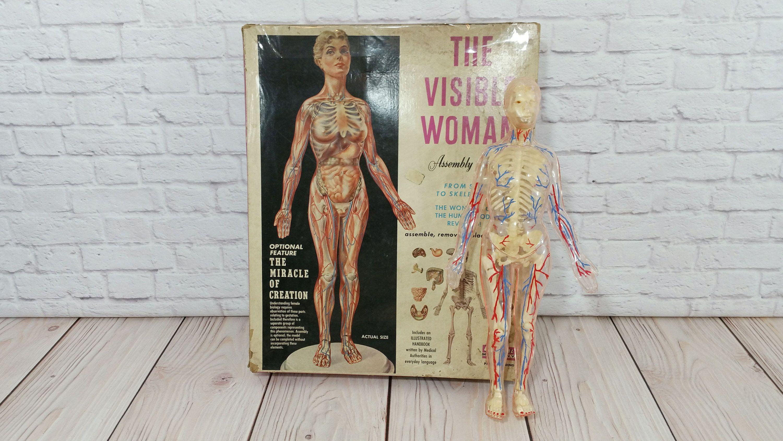 Vintage The Visible Woman Human Anatomy Model Renwall Human